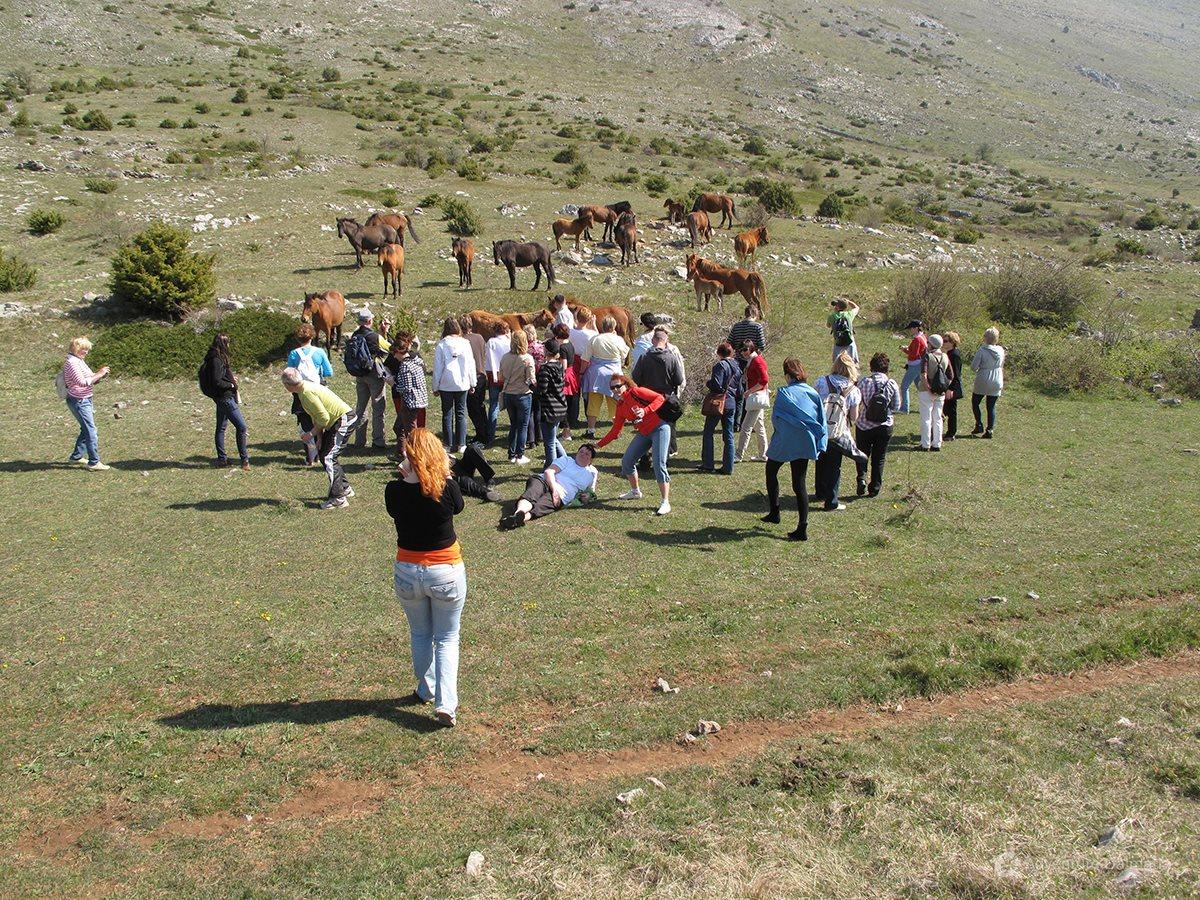 Wild horses, Velebit