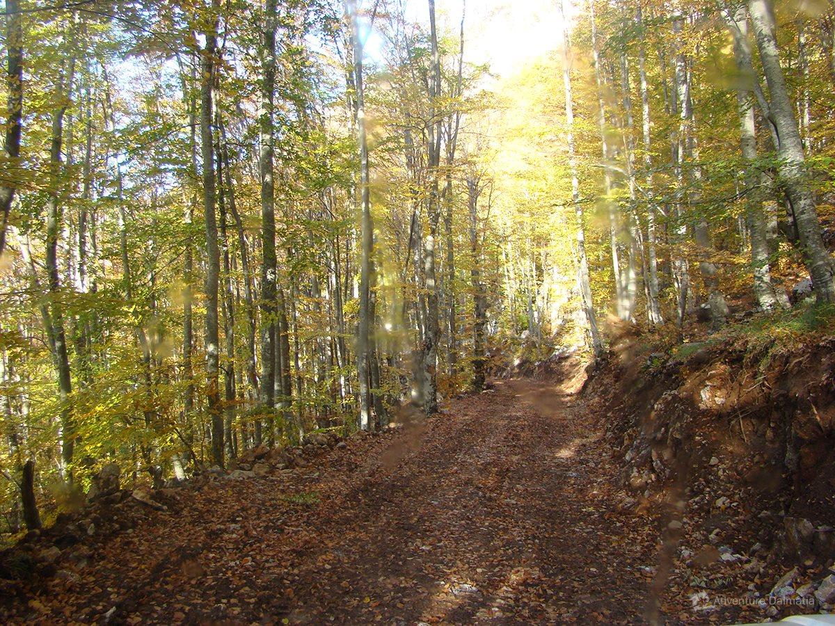 Hiking route near Dabarski kukovi