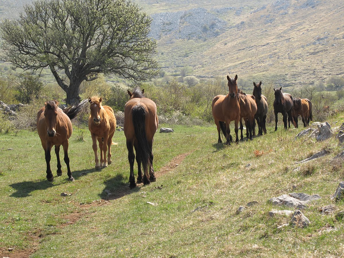 Wild horses herds can be seen on the mountain