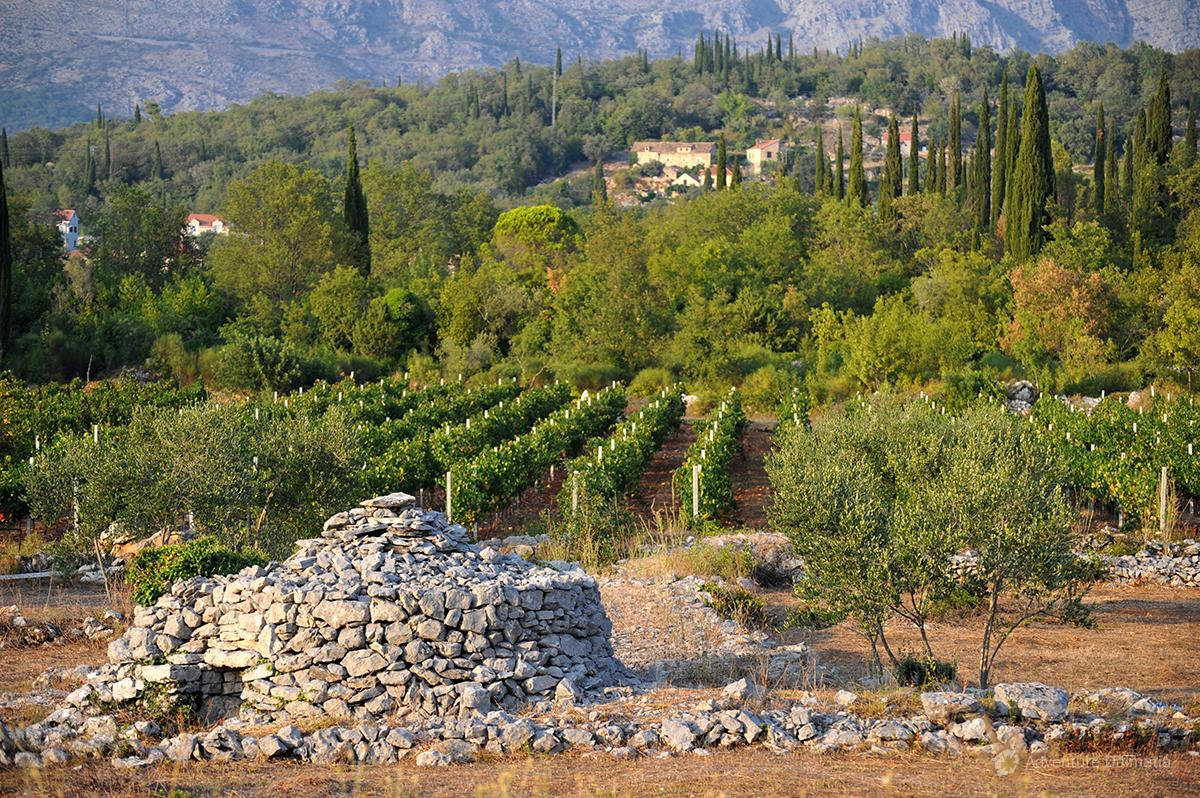 Vineyards in Konavle valley