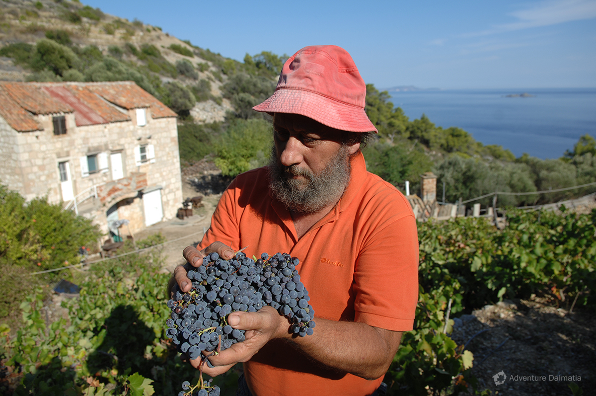 Famous red wines are made at the heart of the Adriatic sea - Svetac island