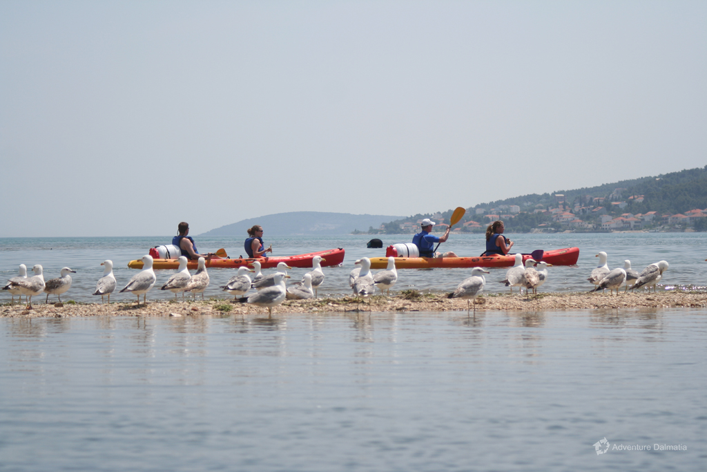 Sea gulls posing while we paddle in Trogir